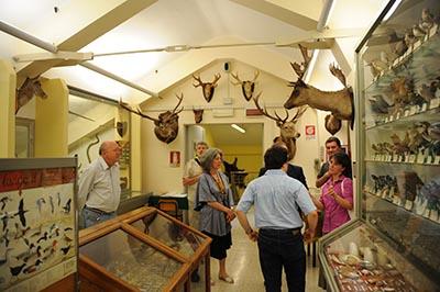 esposizione_museo